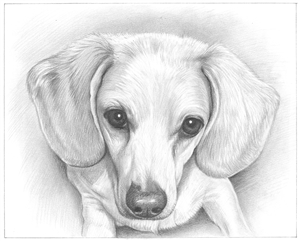 Hand Drawn Pencil Sketch from Photo | Pencil Portrait Drawing | Sketch Artists