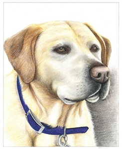 Hand Drawn Colored Pencil Portraits from Photos   Colored Pencil Drawings from Photos