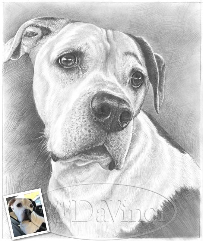 Custom Pet Line Drawing Portrait From Photo One Line Art Drawing Single Line Art Pet Sympathy Gift Pet Loss Gift DIGITAL DOWNLOAD