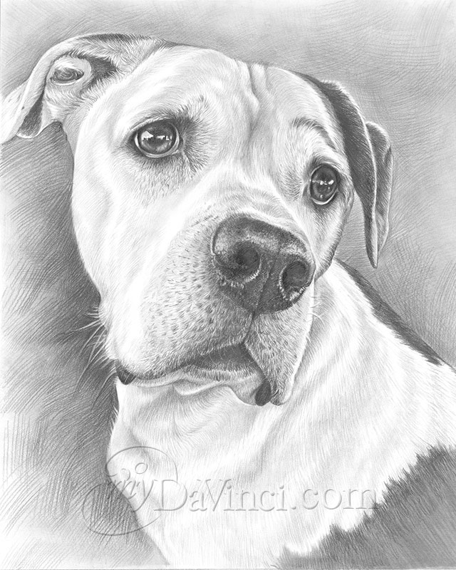 Hand Drawn Pencil Sketch from Photos - myDaVinci com